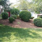 Hedge-Trimming-&-Mulch