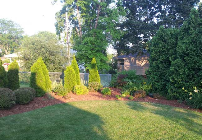 Hedge-Trimming-&-Mulch-Install